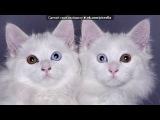 «Со стены $Собаки$Коты$» под музыку Белка и Стрелка. Лунные Приключения  - Легенда инопланетянина. Picrolla