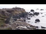 Сан Симеон - Лежбище Морских Слонов