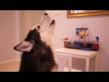 Лайка Мишка классно поёт  особенно на 13 секунде я чуть не плакал так классно смотрите все